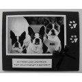 Dog Birthday Greeting Cards - 48