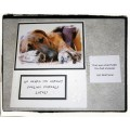Get Well Comical Pet Greeting Card - Made in BC