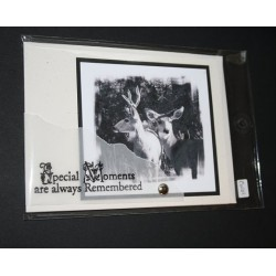 BC Wildlife Greeting Cards - Special Moments