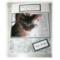 Funny Cat Birthday Card - What happens in the box...