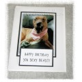 Happy Birthday you Sexy Beast - Dog Greeting Card