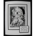 Pet Birthday Greeting Card - Scruffy
