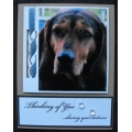 Dog Sympathy Cards - Abby