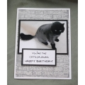 Cat Birthday Greeting Card - Flash