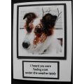 Get Well Greeting Cards - Funny Pet Cards Keta42