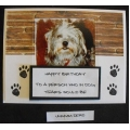 Funny Dog Greeting Card - Scruffy 51