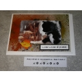 Kitten Greeting Card - Live, Love & Purr