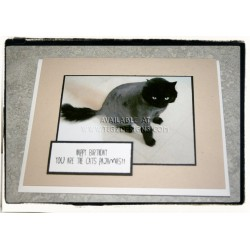 Cats Pajamas Birthday Card - Creston BC Pet Greeting Cards